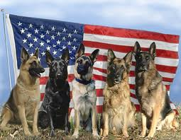 military pet shipping
